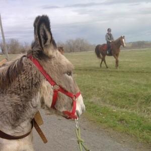 Ânes, poneys et chevaux